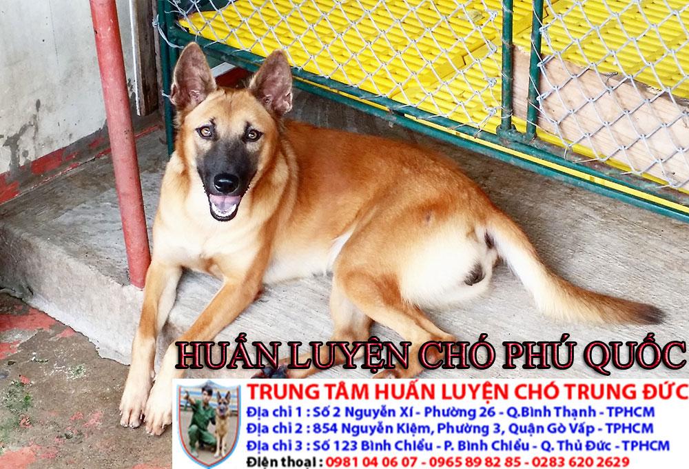 Trường huấn luyện chó tại Tphcm, truong huan luyen cho tai Tphcm