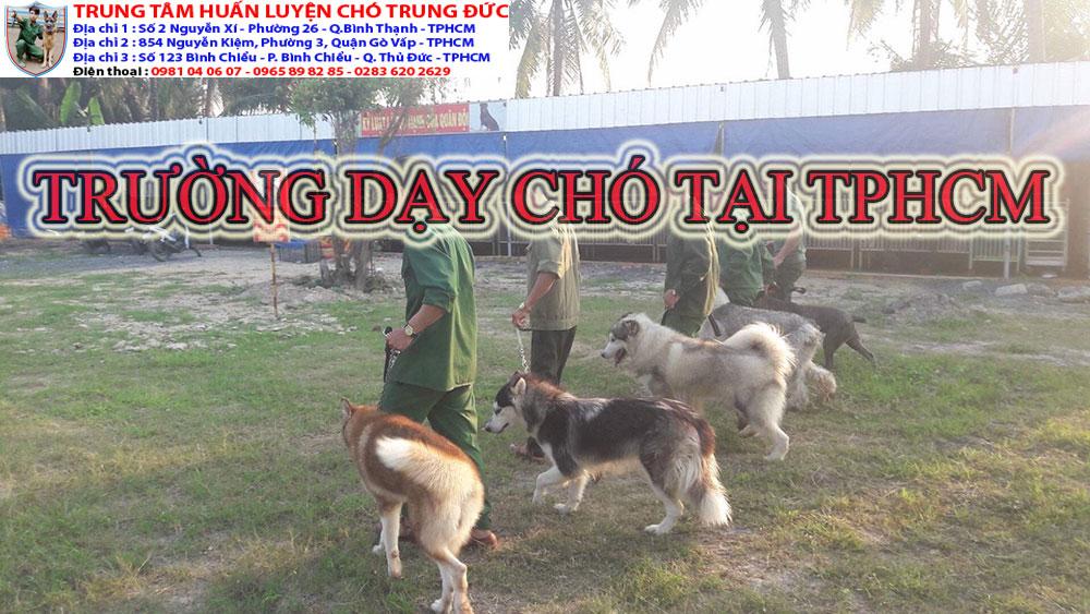 trường dạy chó, truong day cho