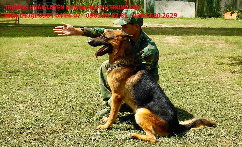 Huấn luyện chó Becgie, huan luyen cho Becgie