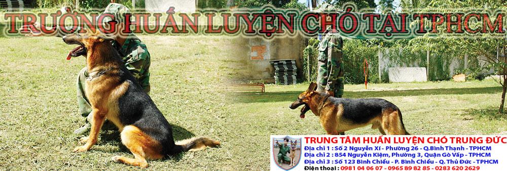 Trường huấn luyện chó Tphcm, truong huan luyen cho tai Tphcm