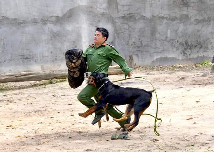 Trung tâm huấn luyện chó tại Tphcm