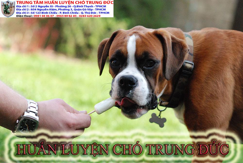 huấn luyện chó, huan luyen cho