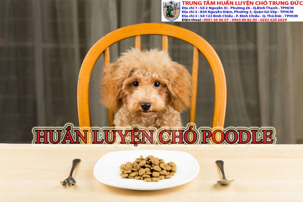 huấn luyện chó poodle, huan luyen cho poodle