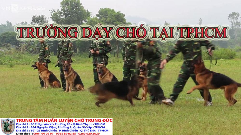 trường dạy chó tại Tphcm, truong day cho tai Tphcm