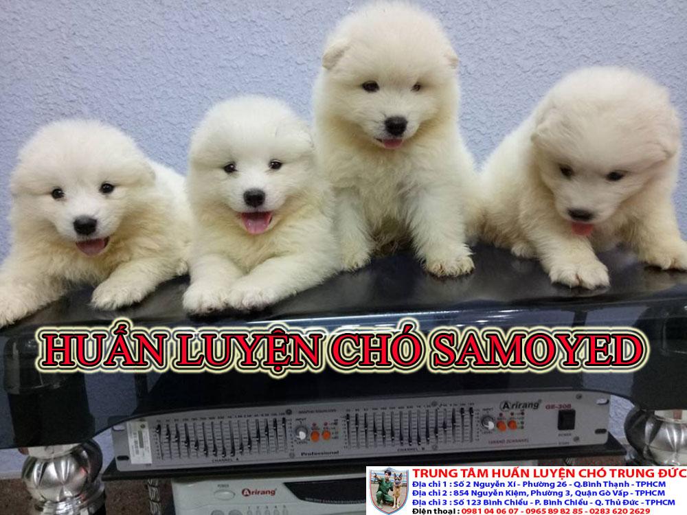 Trung tâm huấn luyện chó Samoyed