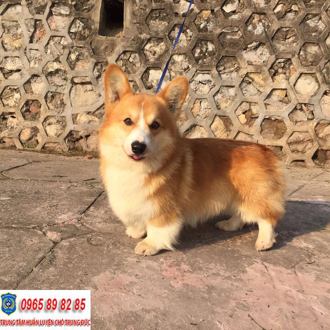 Trung tâm huấn luyện chó huyện Bình Chánh