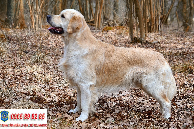 Trung tâm huấn luyện chó huyện Củ Chi