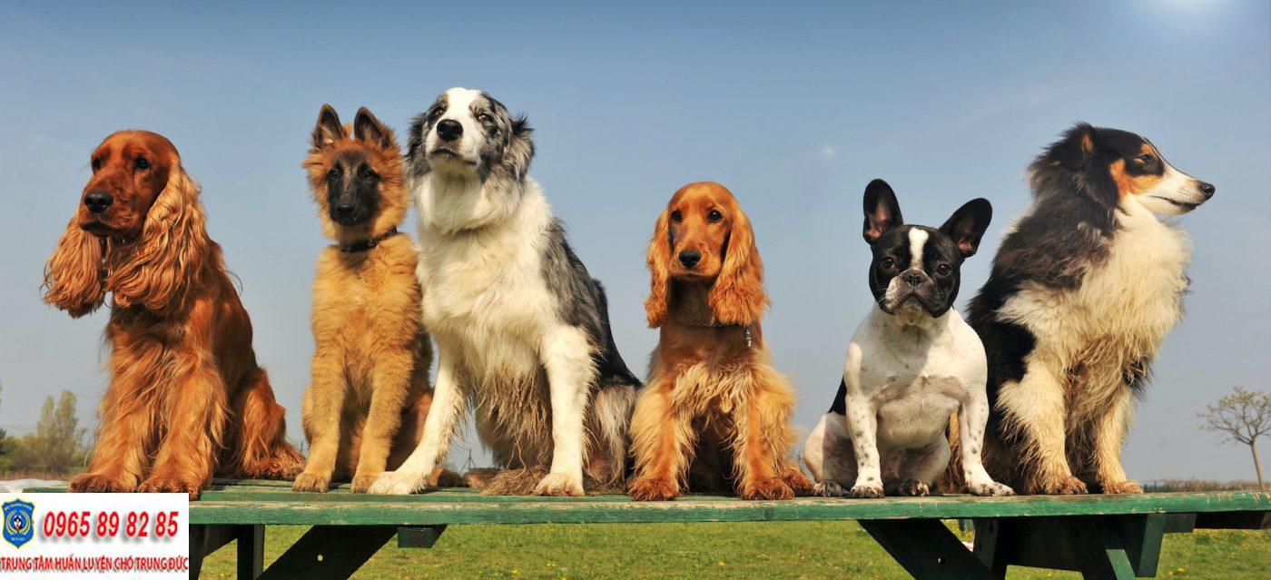 Trung tâm huấn luyện chó Quận 10
