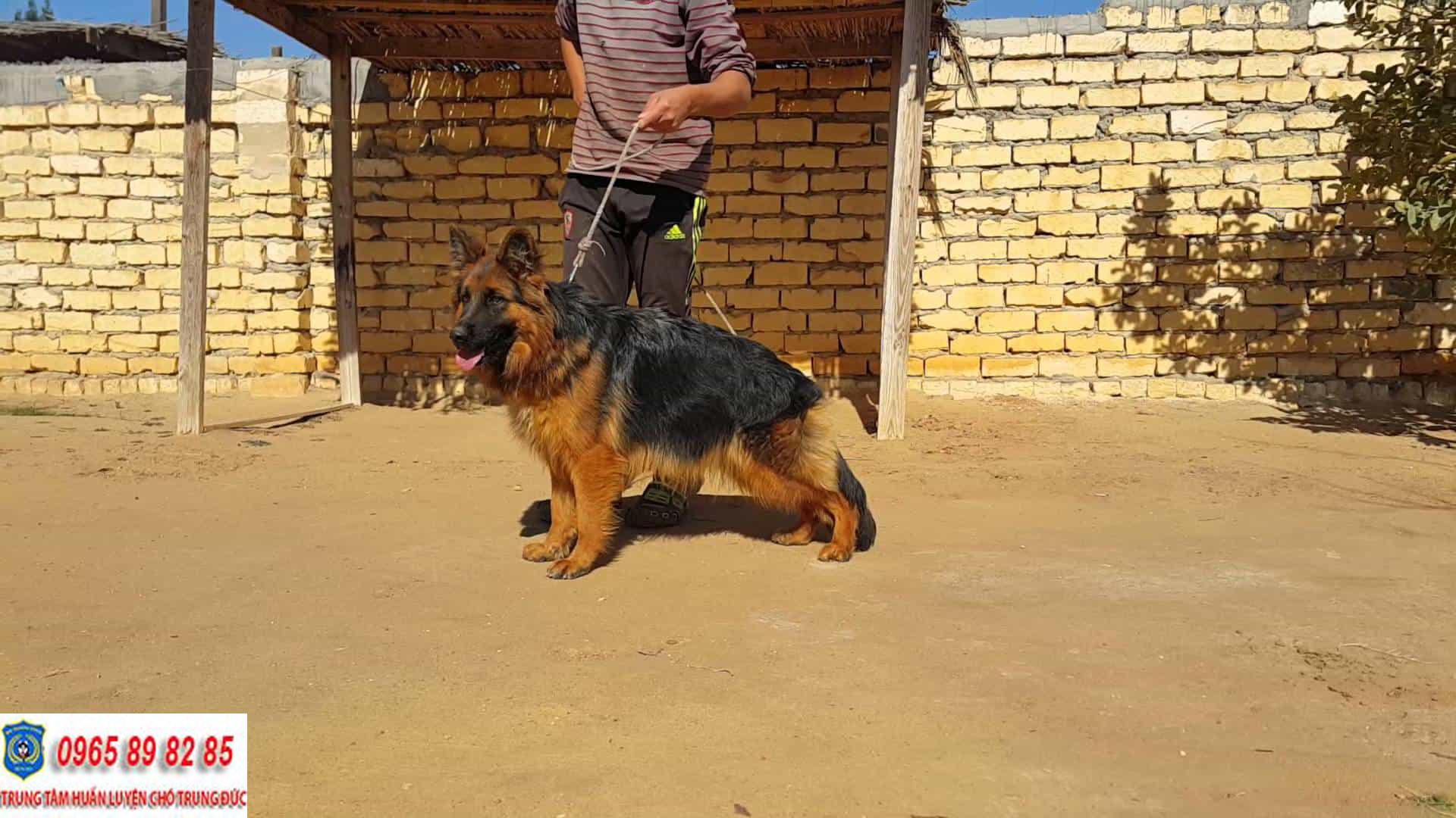 Trung tâm huấn luyện chó Quận 11