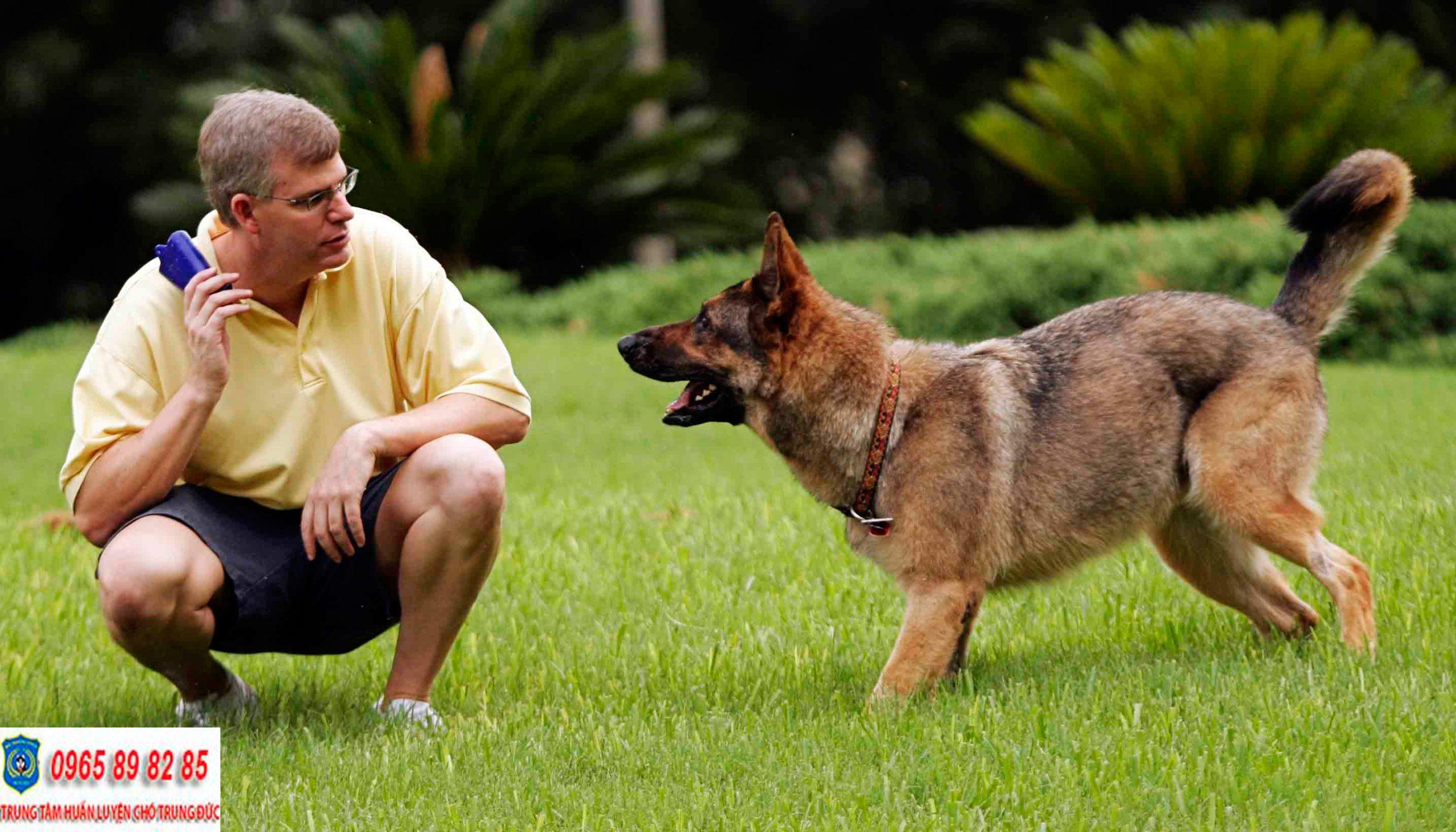 Trung tâm huấn luyện chó Quận 12