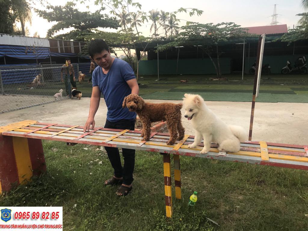 Trung tâm huấn luyện chó Quận 2