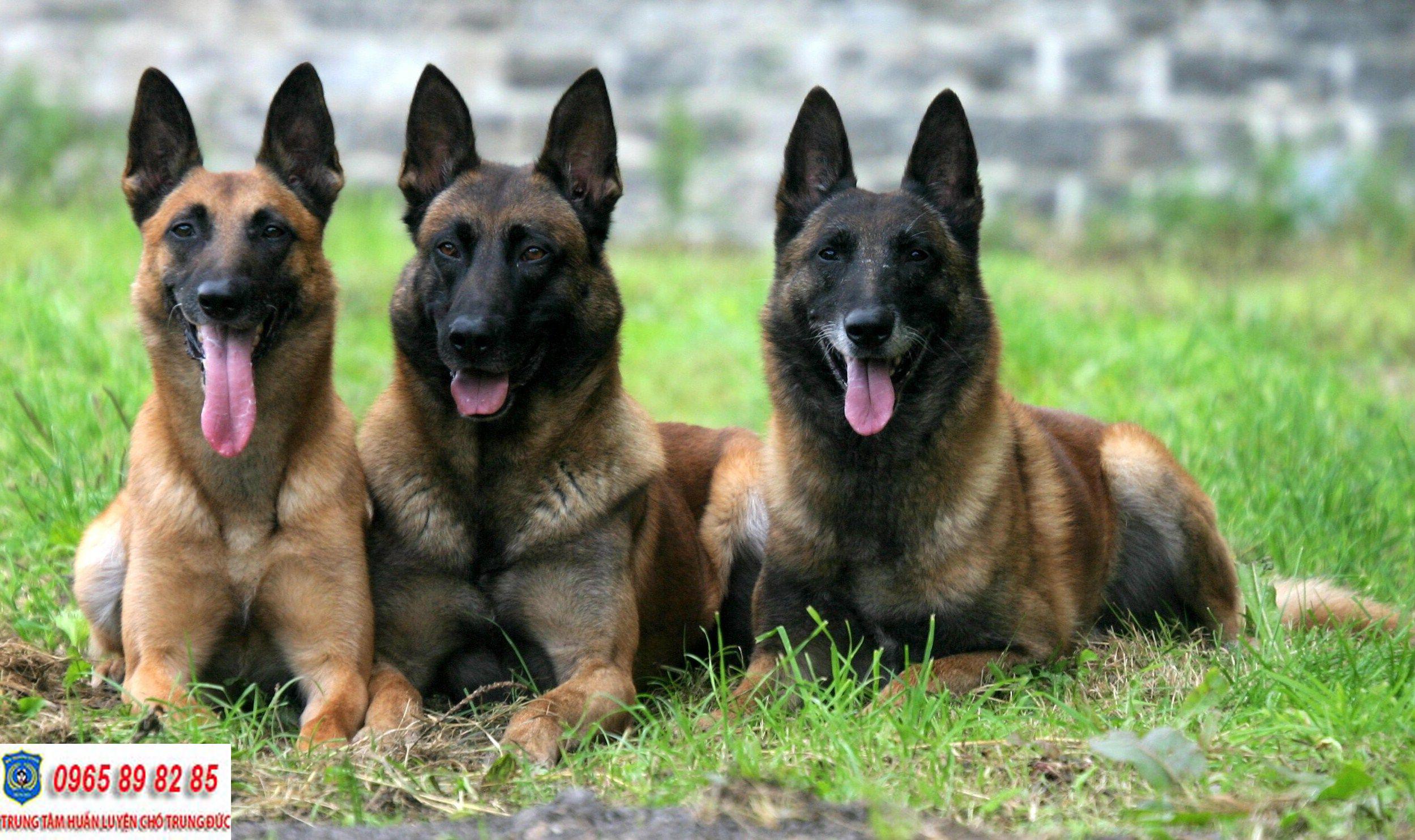 Trung tâm huấn luyện chó Quận 3