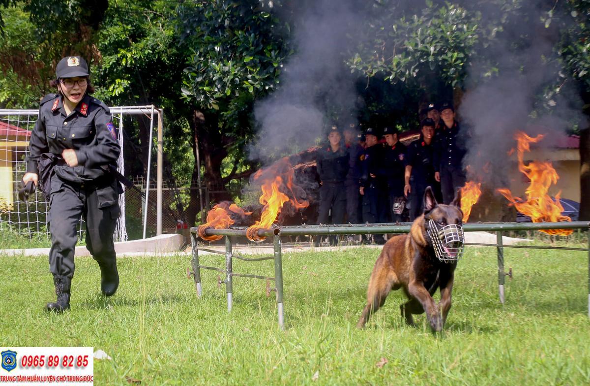 Trung tâm huấn luyện chó Quận 4