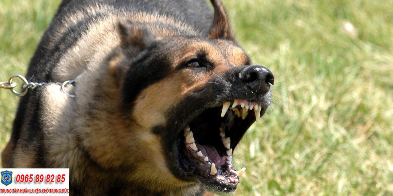 Trung tâm huấn luyện chó Quận 5