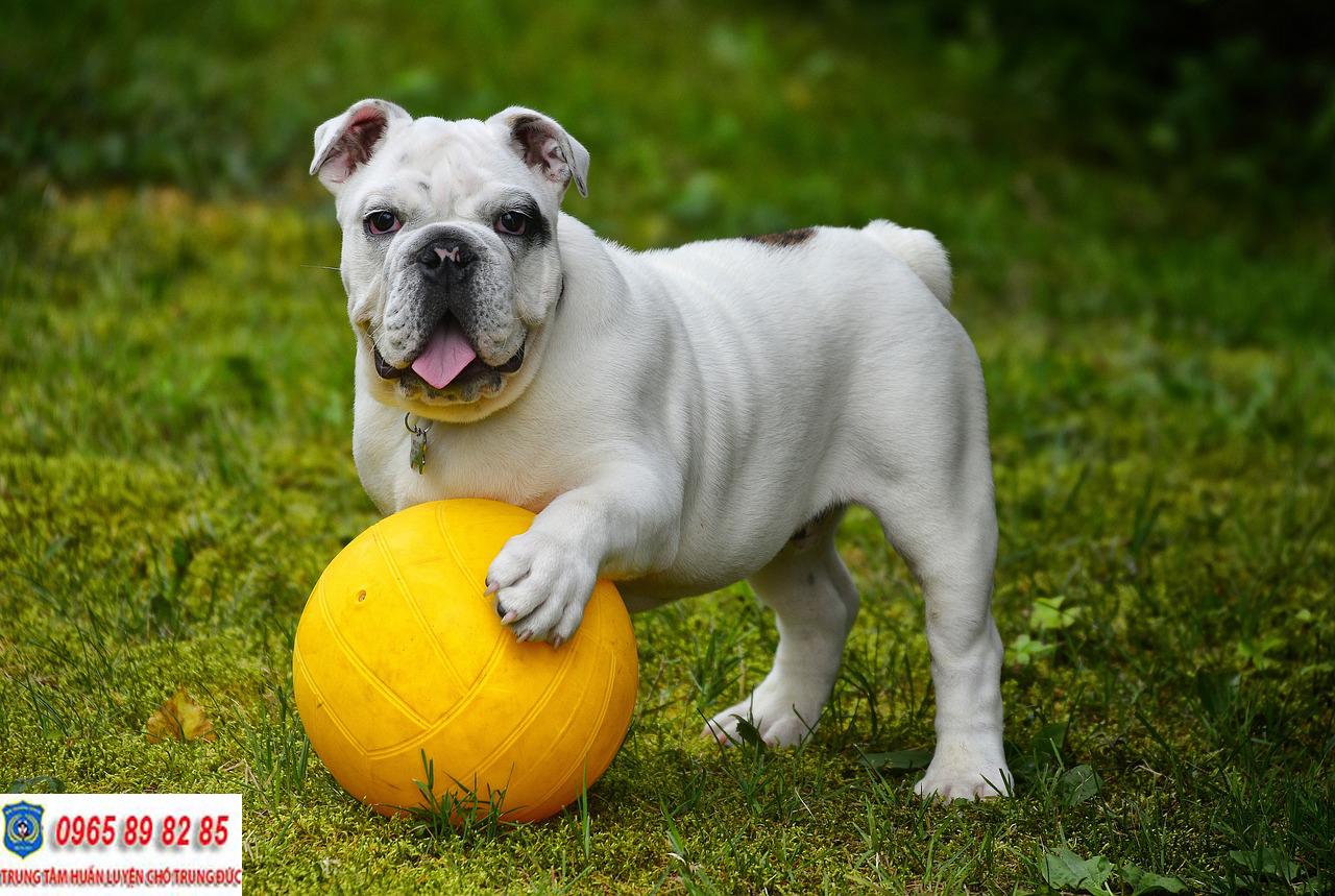 Trung tâm huấn luyện chó Quận 7