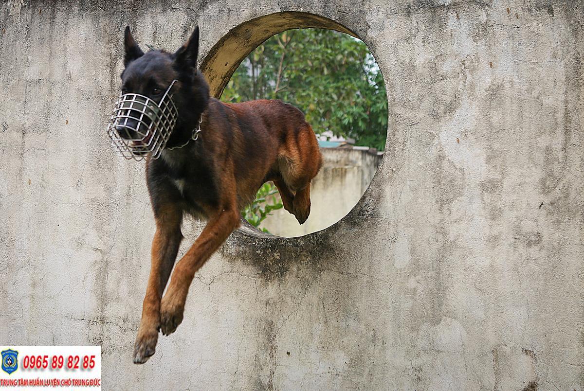 Trung tâm huấn luyện chó Quận 8