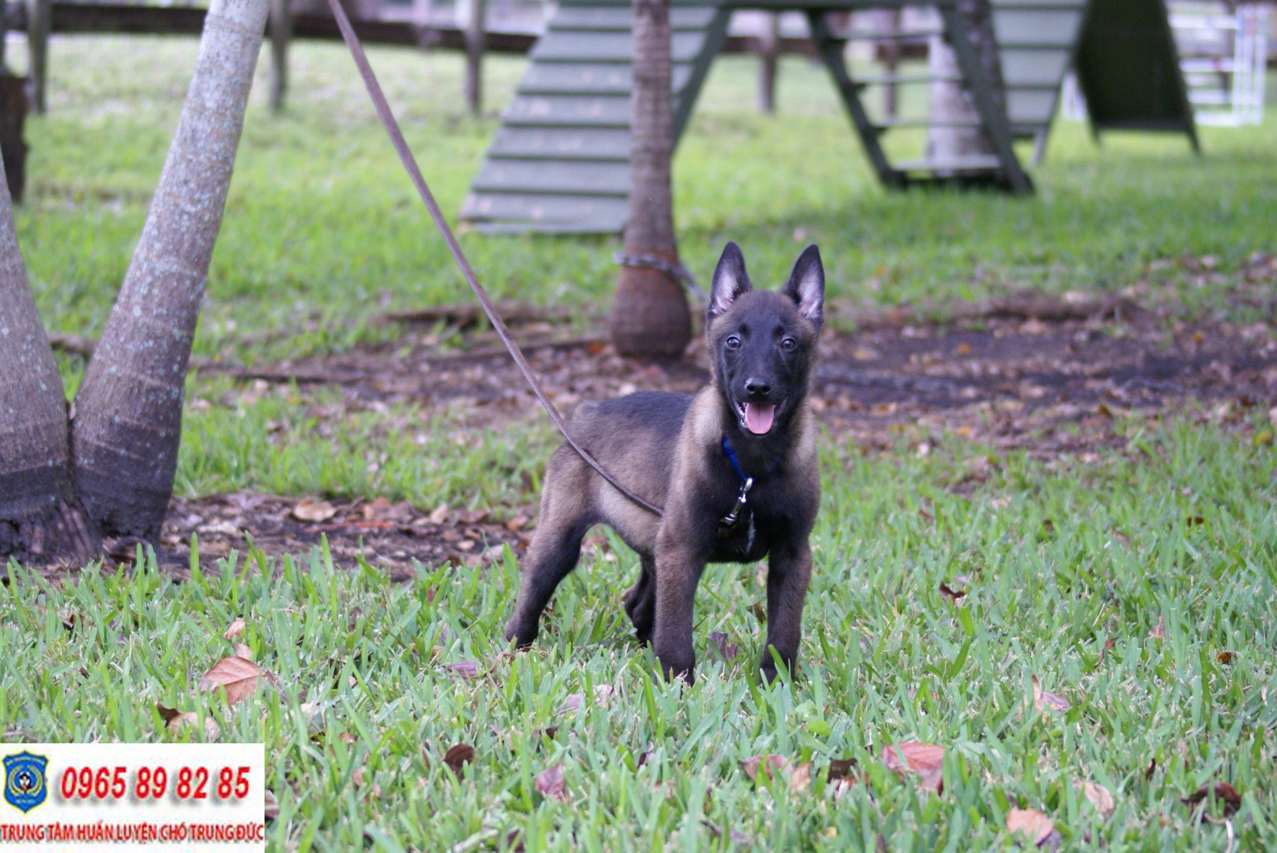 Trung tâm huấn luyện chó Quận 9