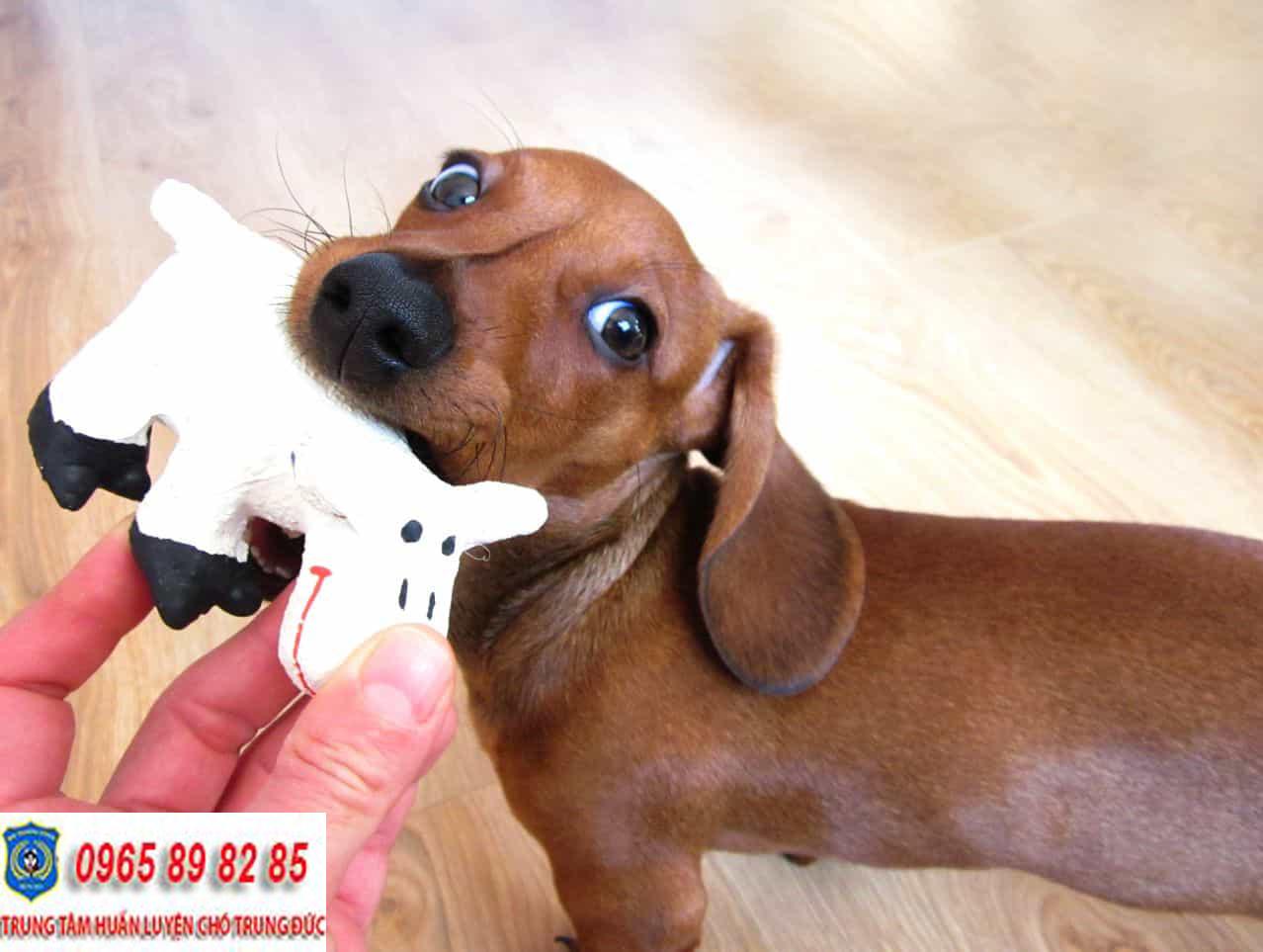 Trung tâm huấn luyện chó Quận Bình Tân