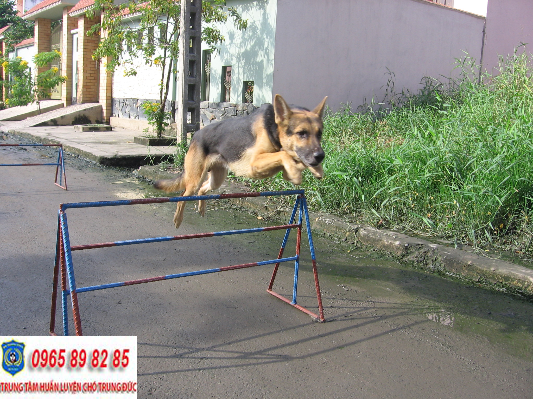 Trung tâm huấn luyện chó Quận Gò Vấp