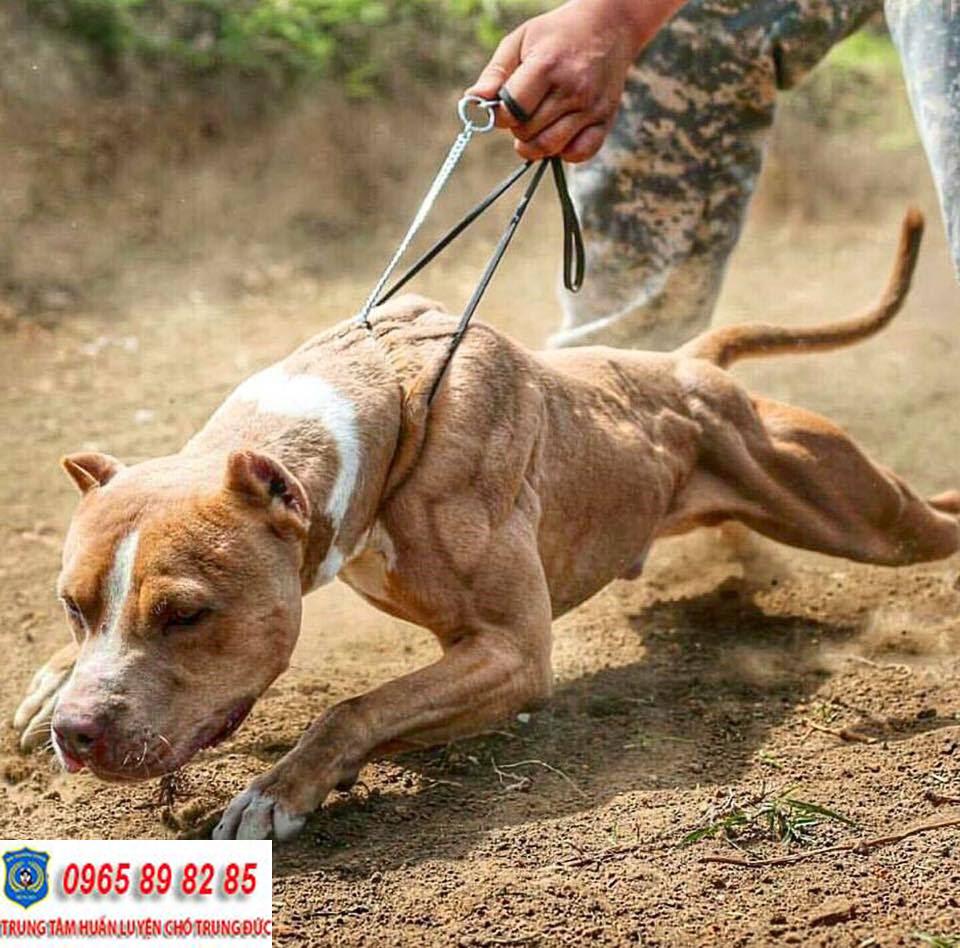 Trung tâm huấn luyện chó Quận Tân Phú