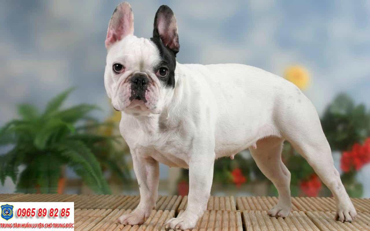 Trung tâm huấn luyện chó Quận Thủ Đức