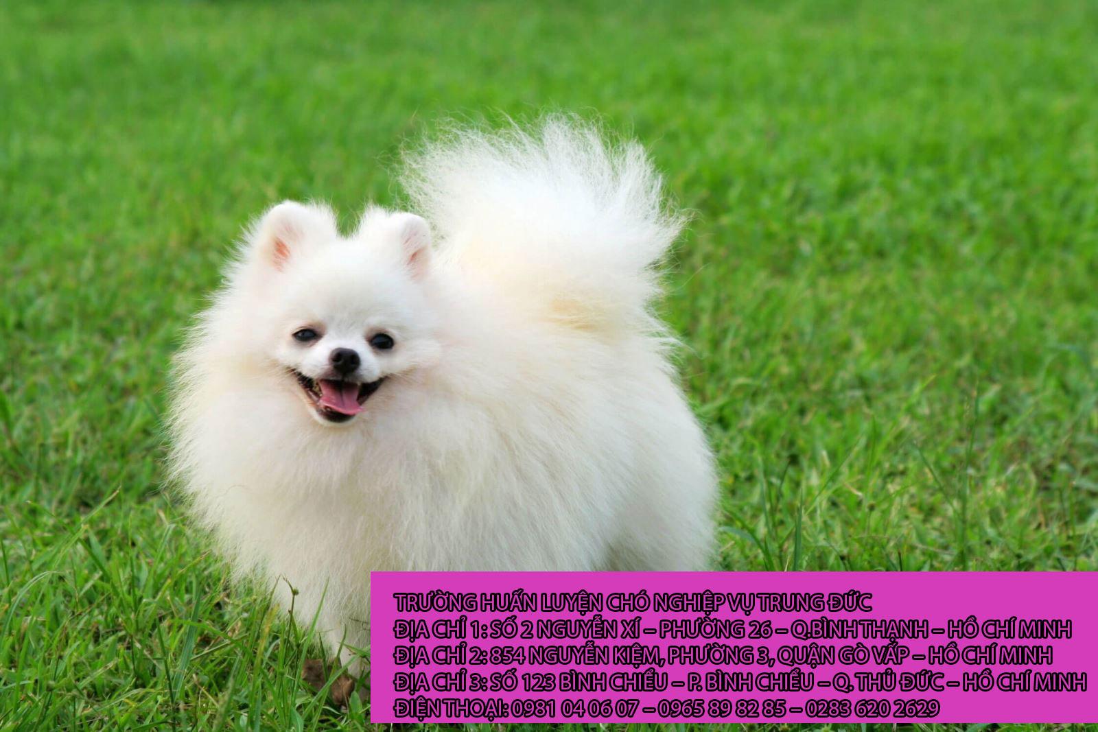 Chó cảnh loài đại diện