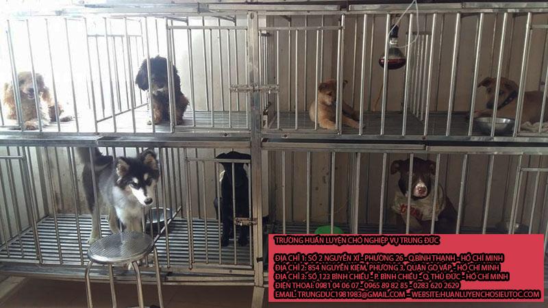 Giữ chó mèo huyện Bình Chánh