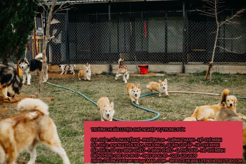 Giữ chó mèo huyện Hóc Môn