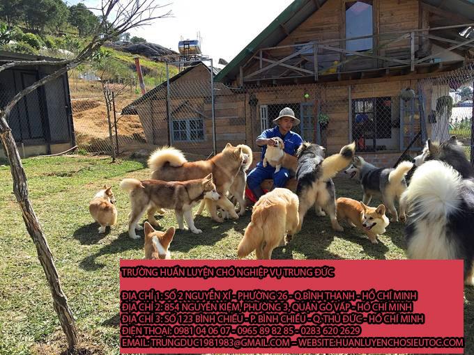 Giữ chó mèo Quận Bình Tân