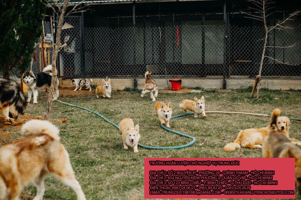 Giữ chó mèo Quận Gò Vấp
