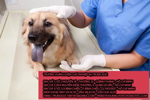 Giữ chó mèo huyện Củ Chi
