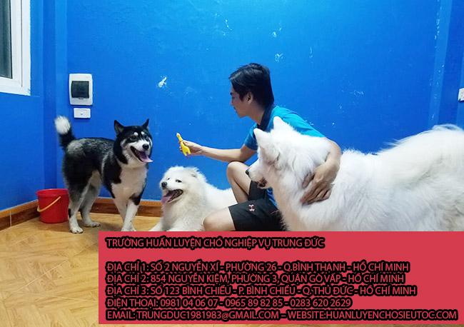 Giữ chó mèo Quận Phú Nhuận