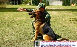 Bảng báo giá huấn luyện Chó Becgie