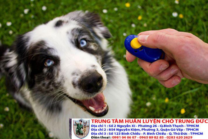 Bảng báo giá huấn luyện Chó Bắc Kinh
