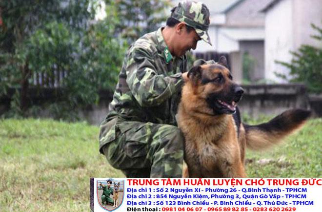 Dịch vụ huấn luyện chó