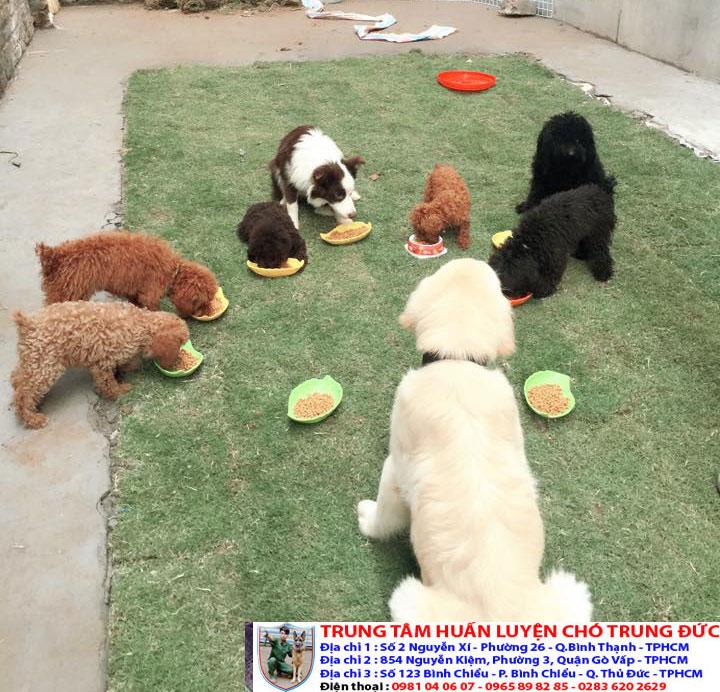 Dịch vụ huấn luyện chó giá rẻ