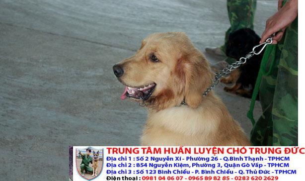 Bán chó cảnh đẹp được huấn luyện với giá rẻ nhất tại Tphcm - 276597