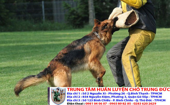 Lớp học huấn luyện chó