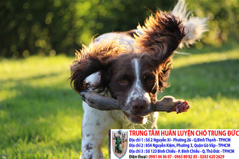 Huấn luyện chó săn