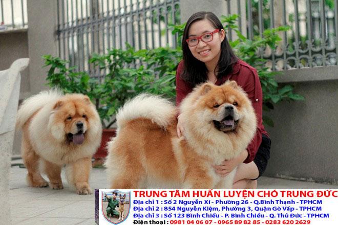 Tên các loại chó cảnh đẹp nhất trên thế giới