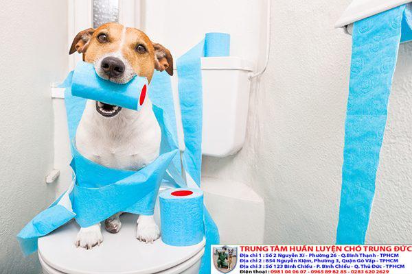Hướng dẫn chó đi vệ sinh đúng chỗ