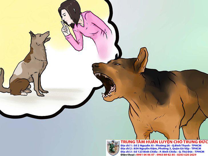 Hướng dẫn chó không sủa bậy