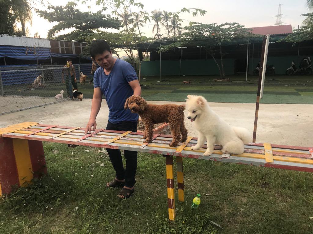 đưa chó đi dạo chơi