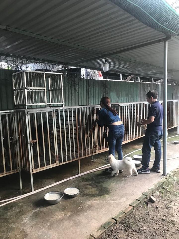 Khách hàng đến thăm chó