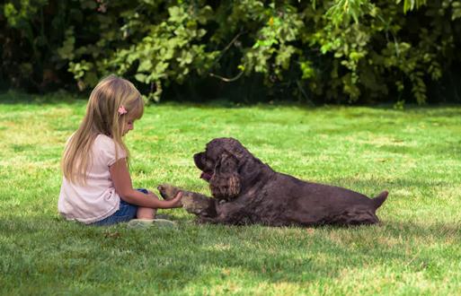 Hướng dẫn cách huấn luyện chó nằm, ngồi, đứng theo hiệu lệnh dễ dàng