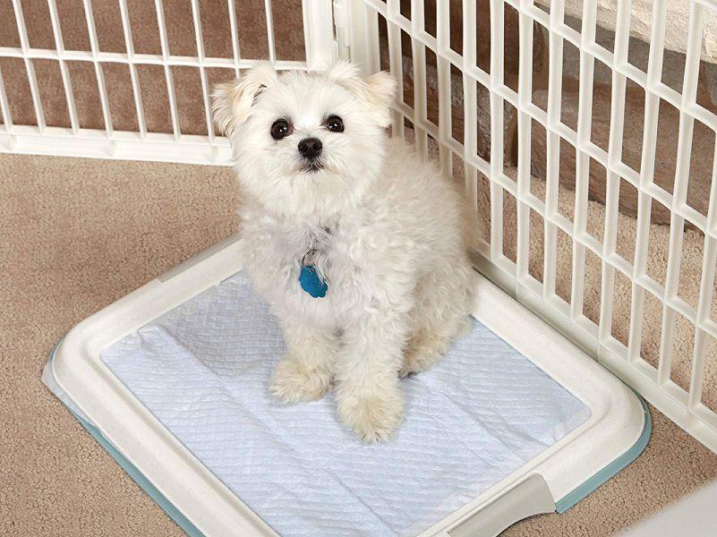 Huấn luyện chó con nghe lời đúng chuẩn ngay tại nhà
