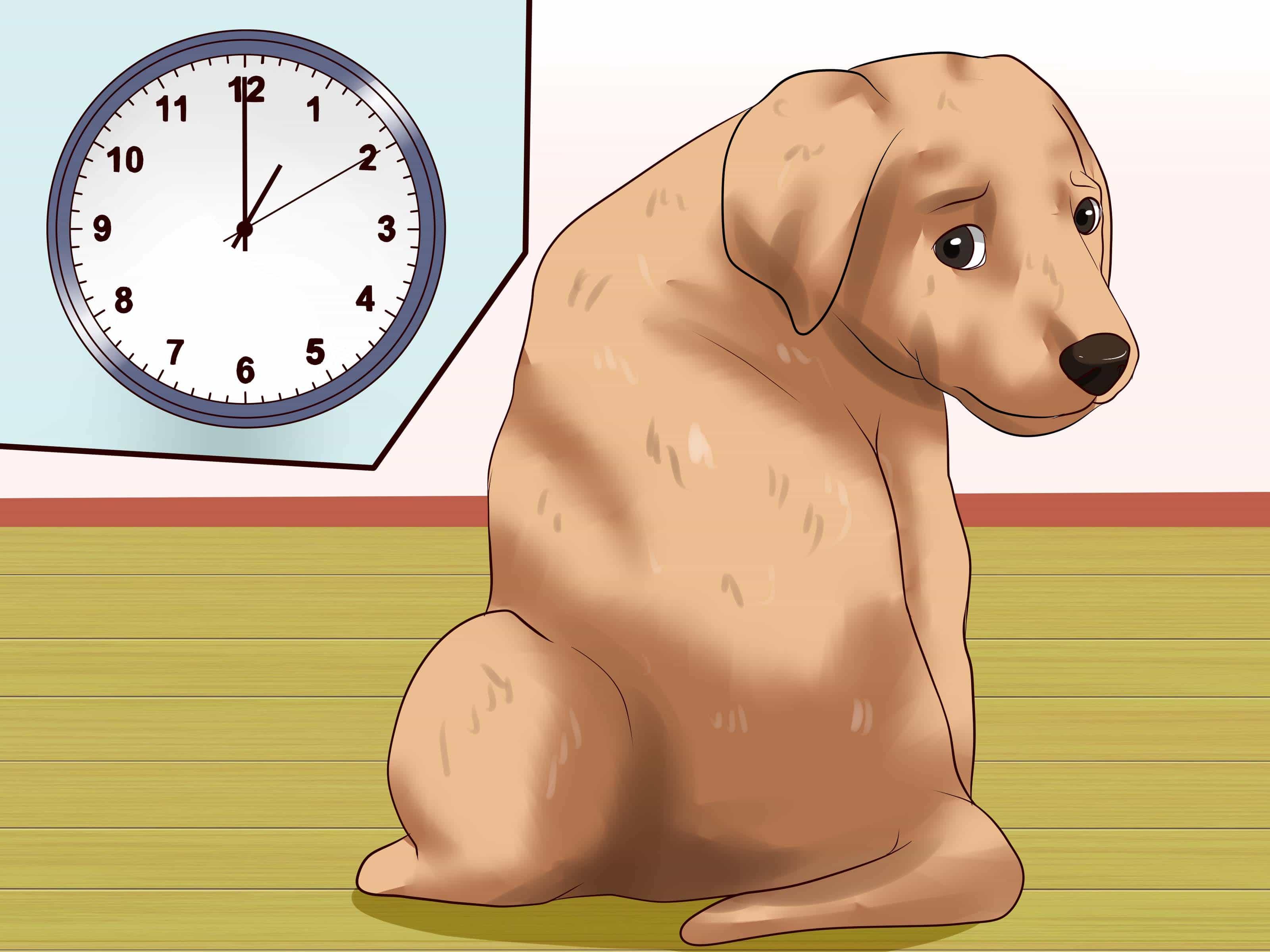 Phương pháp huấn luyện chó đi vệ sinh đúng chỗ cực kỳ đơn giản