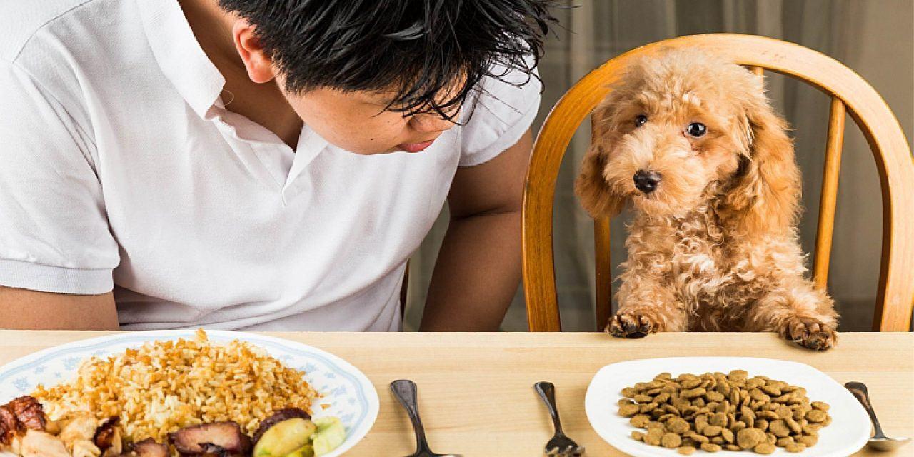Cách huấn luyện chó ăn khi có lệnh đơn giản