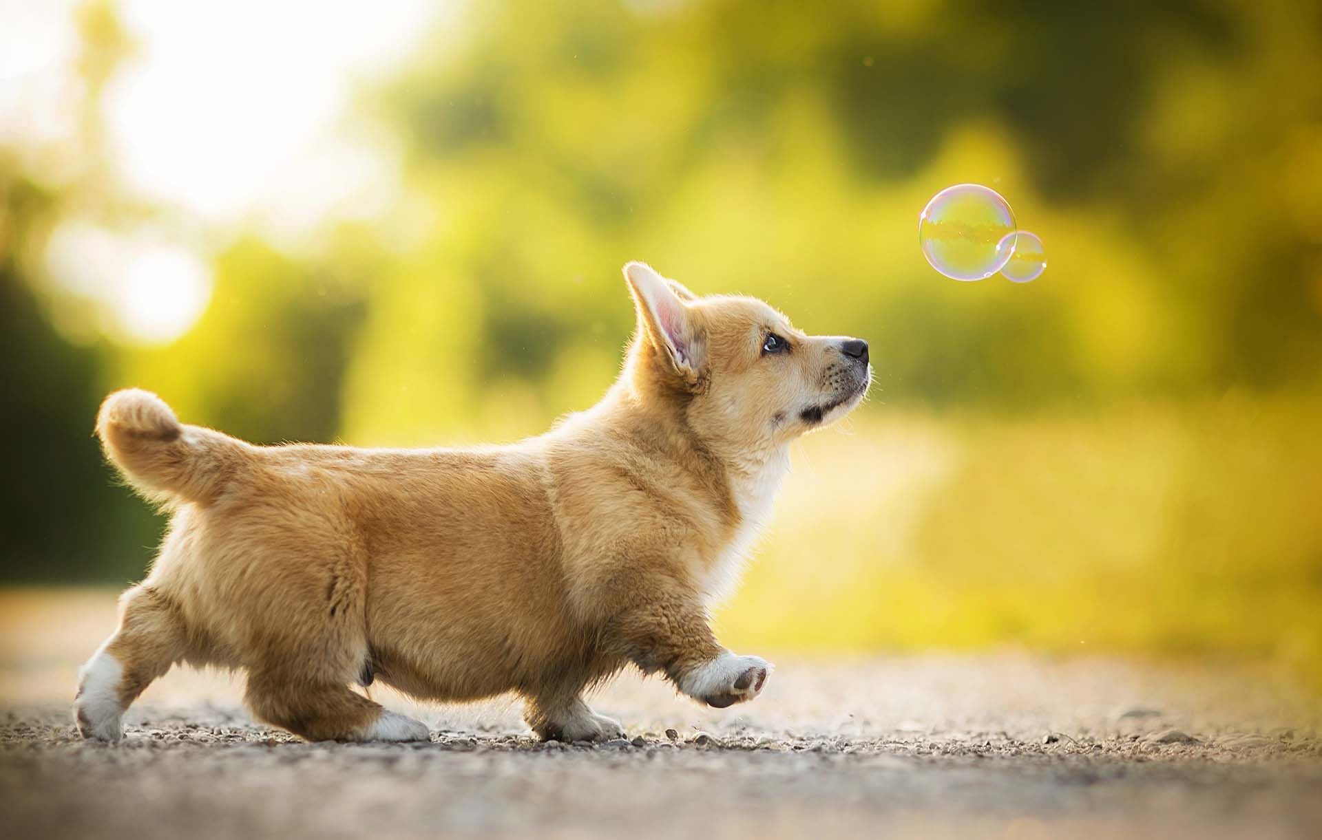Cách huấn luyện chó sủa và im lặng theo yêu cầu