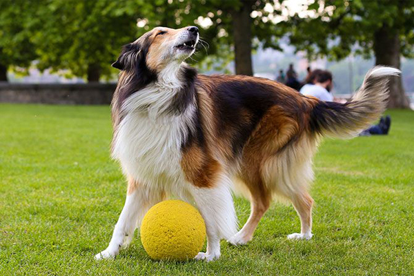 Để huấn luyện chó thành công cần chú ý đến những điều sau